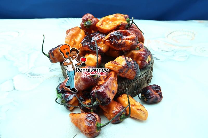 Bhut X Neyde Orange Pepper