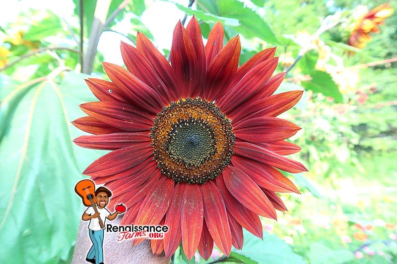 Sunflower Possibilities Mix
