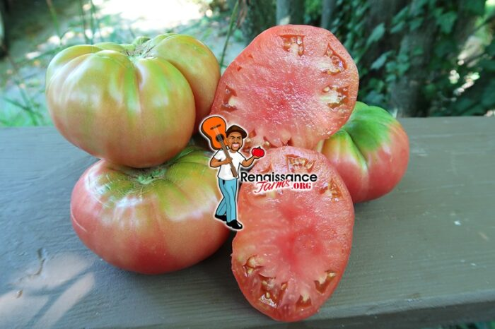 Butterworth's Potato Leaf Tomato