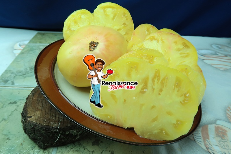 Casey's Pure Yellow Tomato