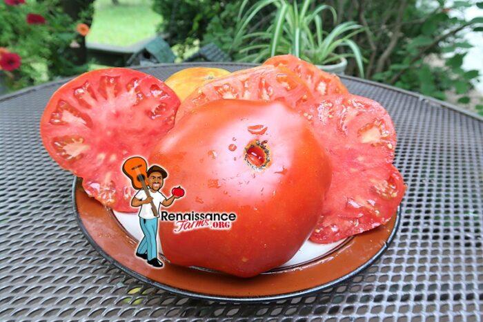 Dixiewine Tomato