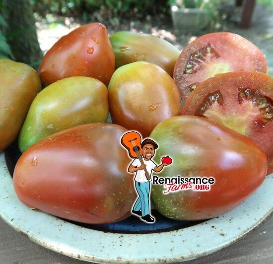Dwarf Aussie Drop Tomato