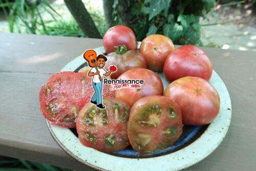 Dwarf Dainty Isabel Tomato