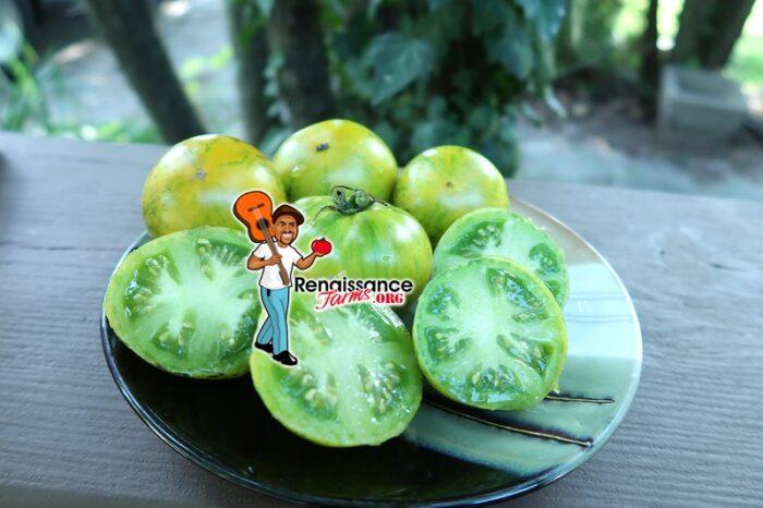 Dwarf Numbat Tomato