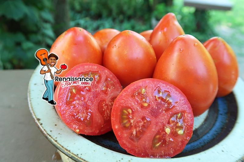 Dwarf Red Heart Tomato