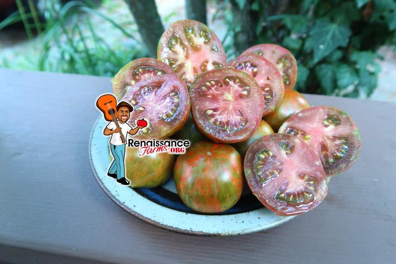 Dwarf Round Robin Tomato