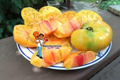 Wherokowhai Tomato