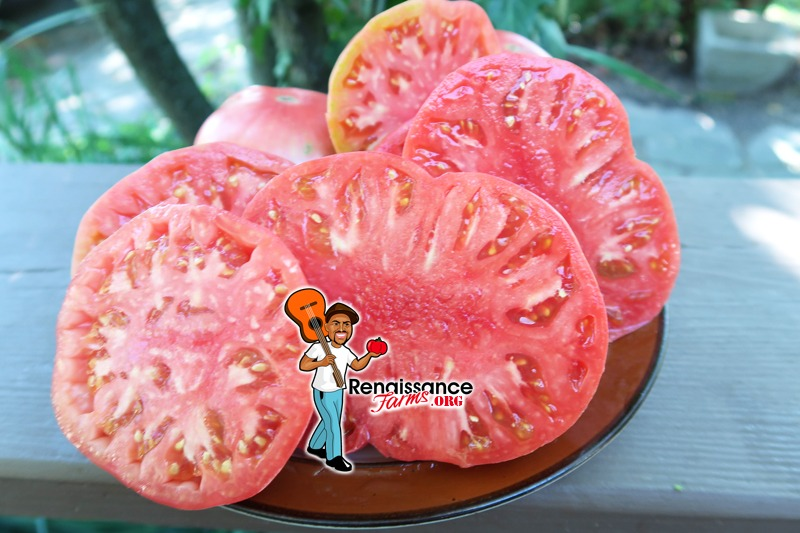 Flathead Monster Pink Tomato