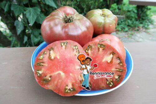 Gary'O Sena Tomato