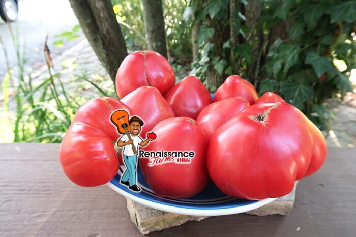 Gopak Tomato
