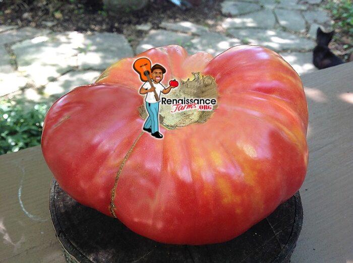 Gordo De Patones Tomato