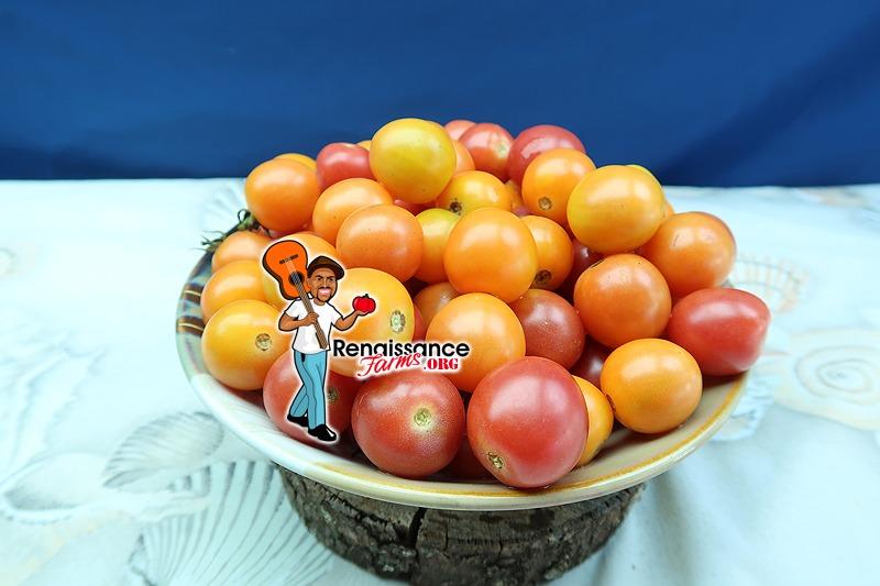Honey Drop Tomato