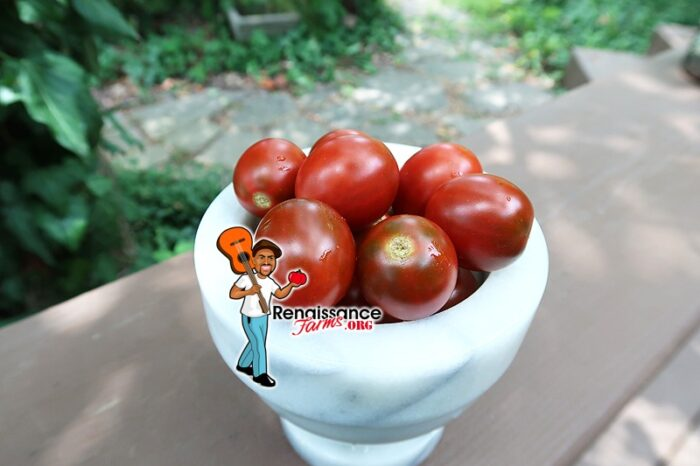 Hooked On Cherry Tomato