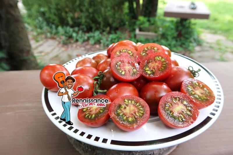 Hooked On Cherry Tomato