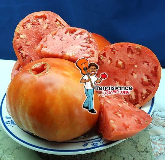 Italo Tomato