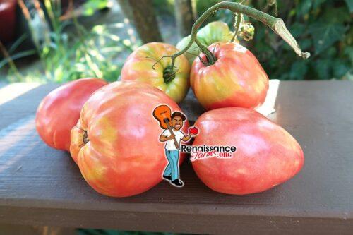 Kardynal Tomato