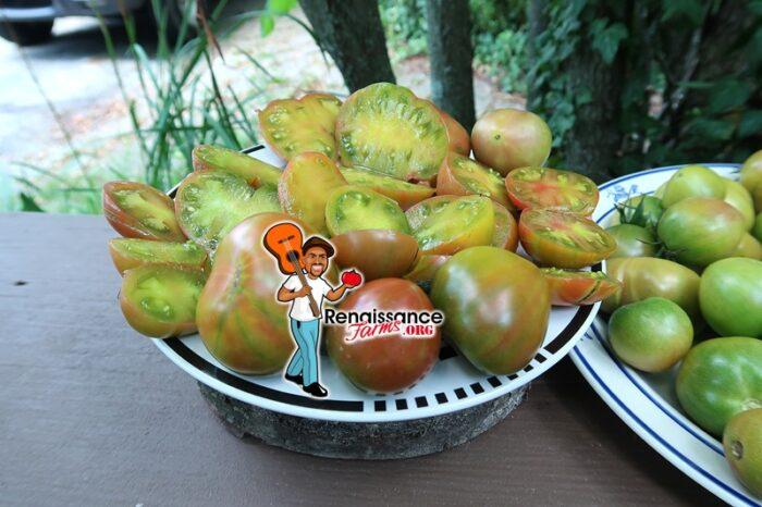 Karma Miracle Tomato