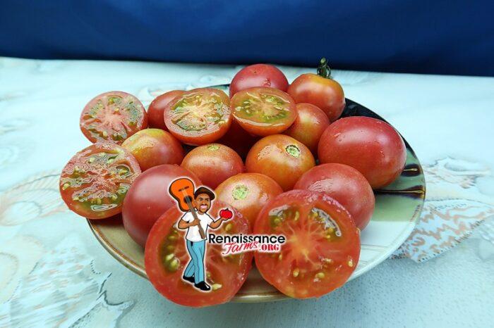 KARMA Pink Tomato