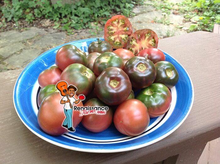 Karma Purple Multiflora Tomato