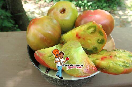 Kozula 72 Tomato