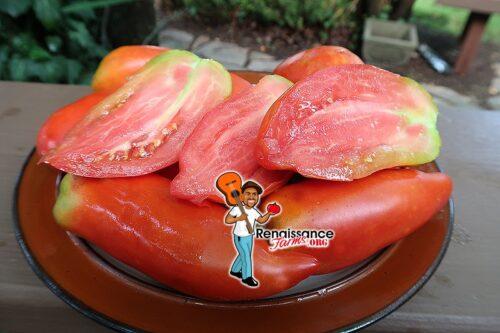 LLarg Tomato