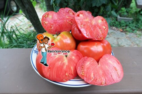 Maria Amazileties Giant Red Tomato