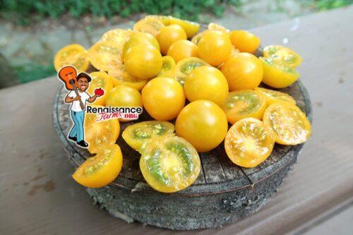 Orange Centiflor Tomato