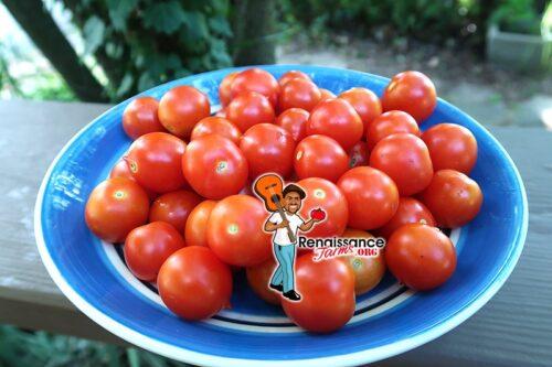 Orange Roussollini Tomato