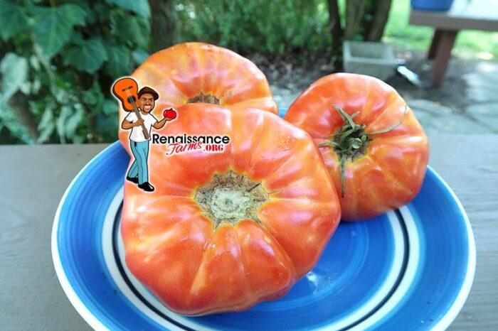 Pepe Jose Tomato