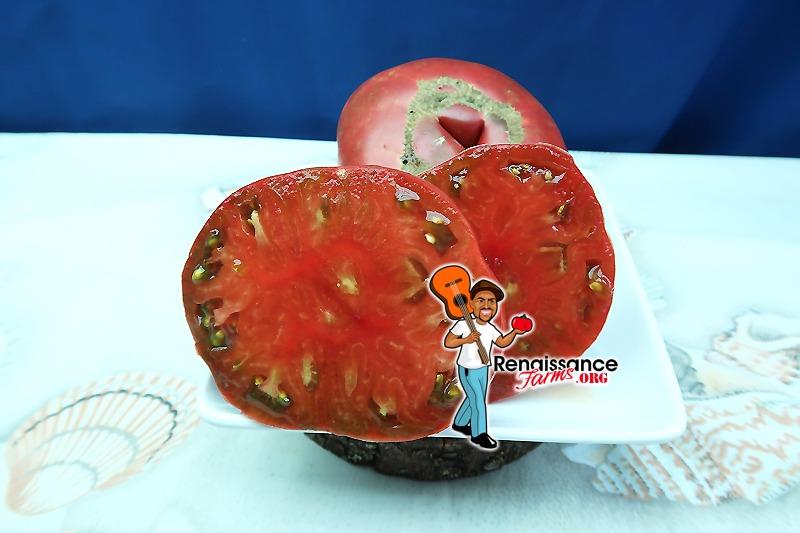 Polaris Tomato