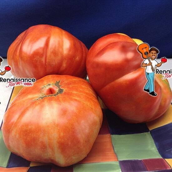 RW Cephei Tomato