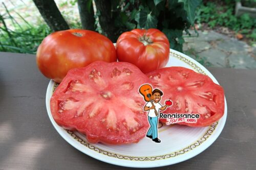 Red Barn Tomato