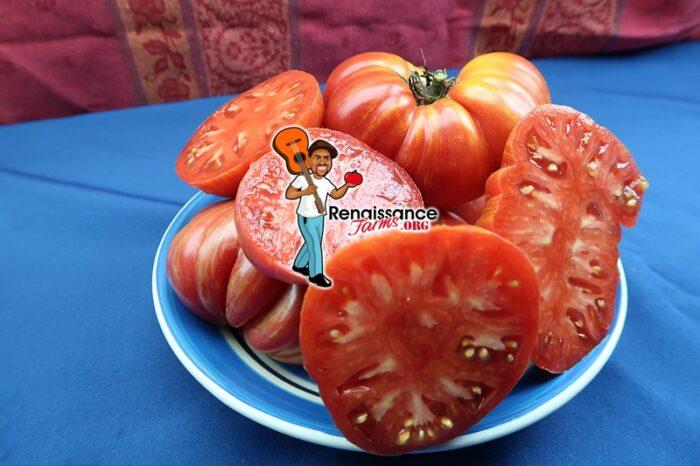 Red Lithium Tomato