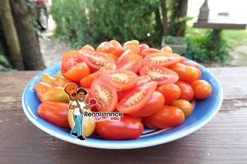 San Marzano Piccolo Tomato
