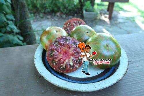 Seigel's Dark Stripe Tomato