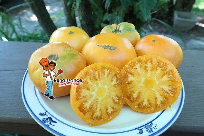 Super Nova Tomato
