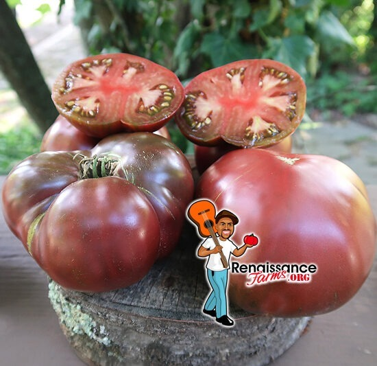 True Black Brandywine Tomato