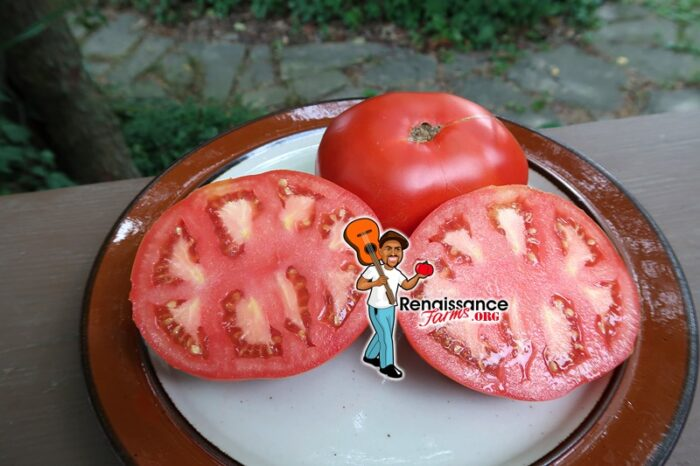 Tomato Van Wert Ohio