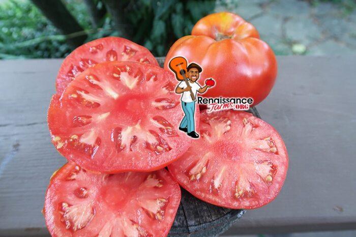 West Virginia Penitentiary Tomato