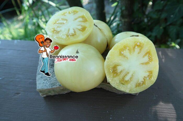 White Sugar Tomato