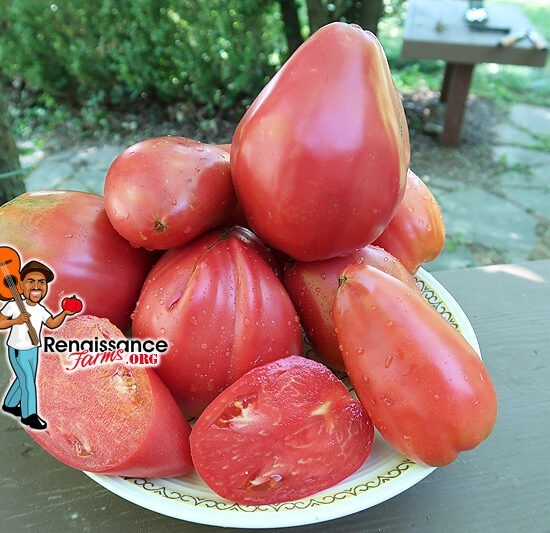 Work Release Paste Tomato