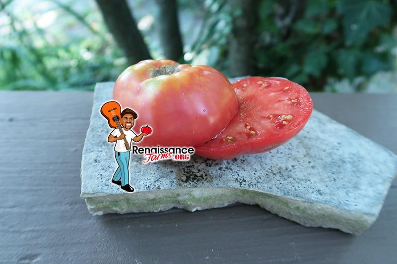 Giant Kalian Tomato