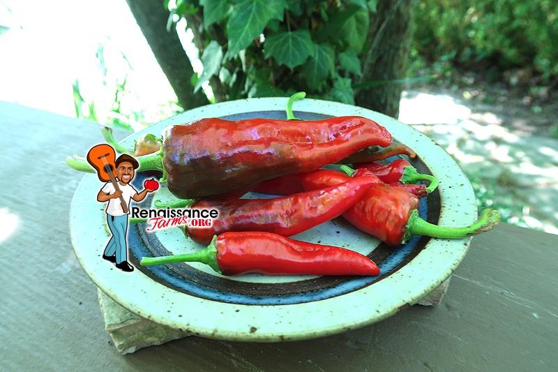 Santa Domingo Pueblo Pepper