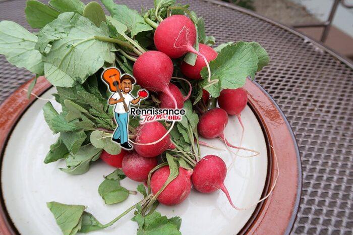 Cherry Belle Radish