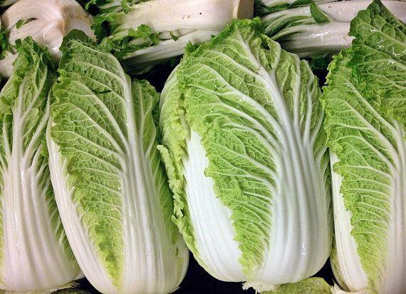 Michihili Chinese Cabbage