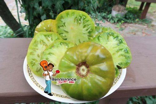Abraham Green Tomato