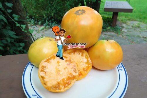 Aunt Eula's Rockhouse Yellow Tomato