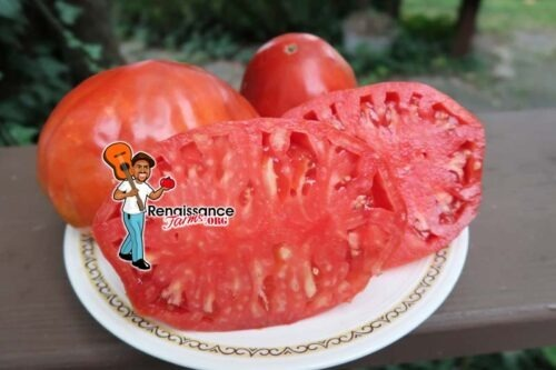 Big Dolly Red Tomato