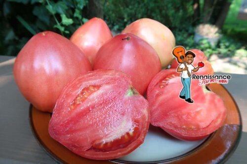 CJ Russian Tomato