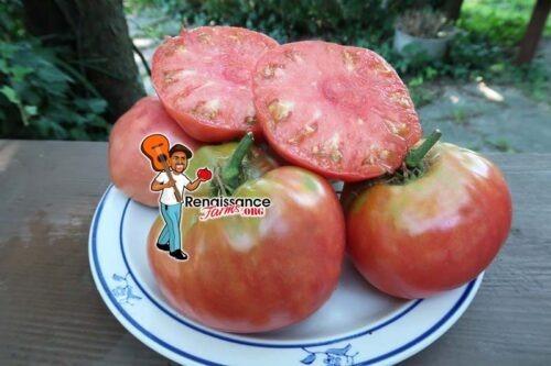 Fred L Potato Top Tomato